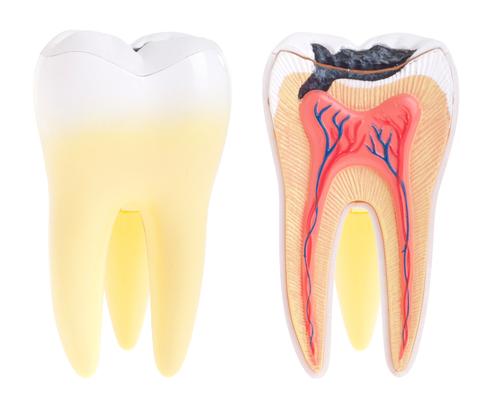 Drug found to make teeth repair themselves