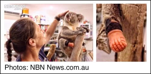 Dental Technician Aids Koala