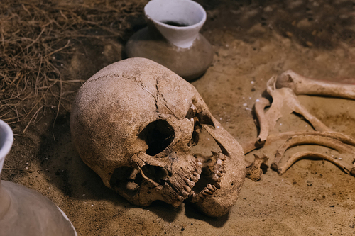 Ancient teeth trace the history of epidemics