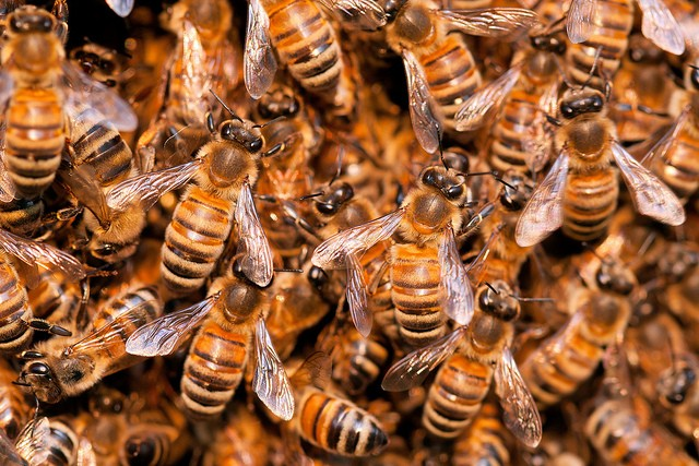 Swarm theory - what's buzzing?
