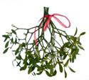 Hide the mistletoe says NASDAL